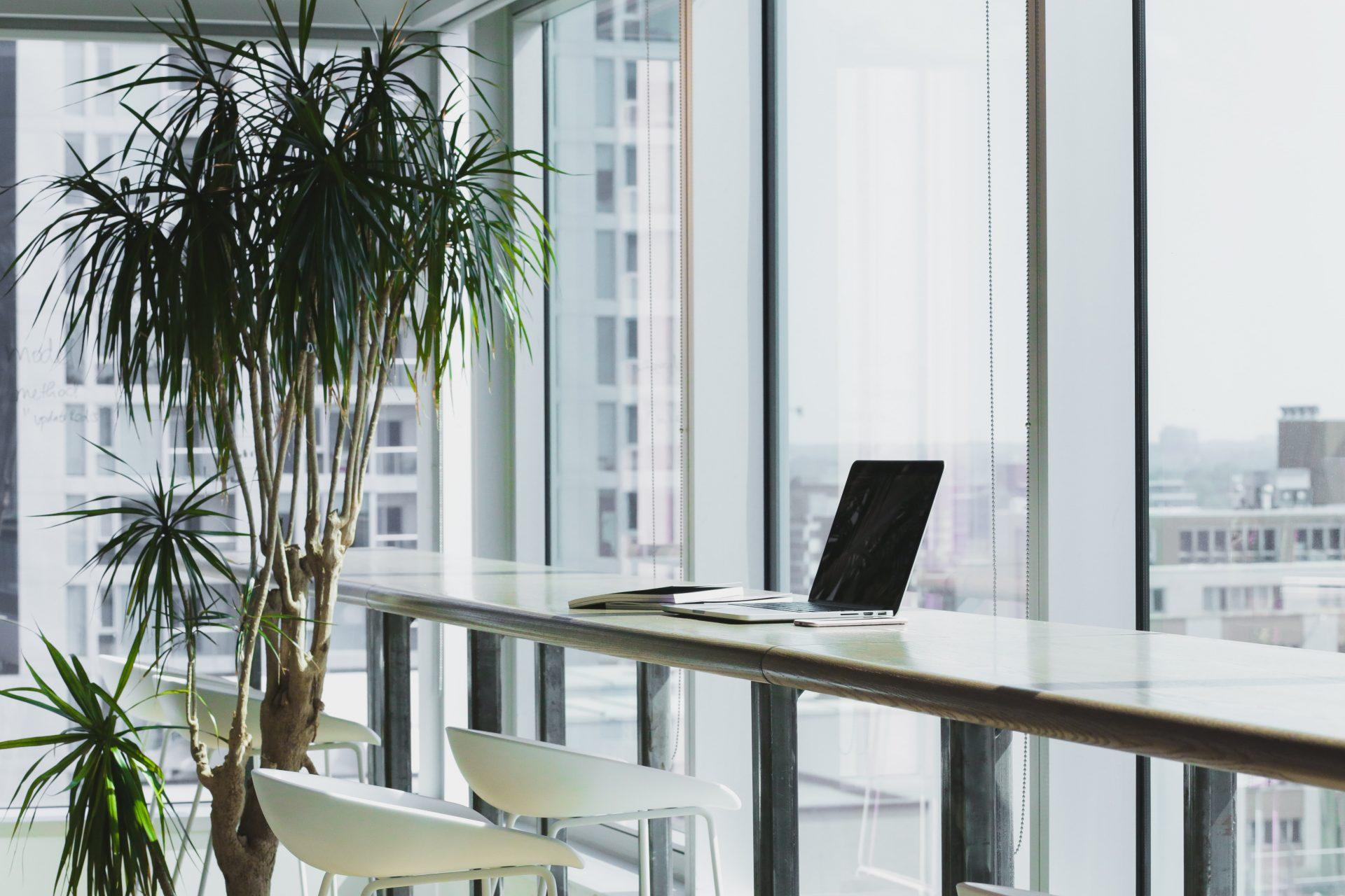 grande plante verte dans un bureau vide avec un ordinateur posé